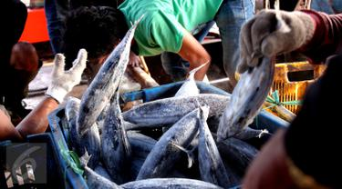 Peraturan Menteri Susi Bikin Nelayan Merugi