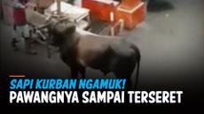 SAPI NGAMUK