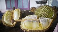 Penampakan durian bawor khas Alasmalang, Banyumas. Berdaging tebal, manis, legit dan beraroma kuat. (Foto: Liputan6.com/Muhamad Ridlo)