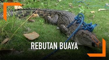 Penangkapan buaya di Ambon, Maluku diwarnai kericuhan setelah warga mencoba mengambil hewan buas tersebut untuk penangkaran.