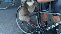 Pengendara sepeda berhenti di tengah jalan untuk memberi minum kepada koala. (Source: instagram/@bikebug2019)
