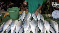 Pedagang menyiramkan air pada ikan bandeng yang dia jual di kawasan Rawa Belong, Jakarta, Selasa (21/1/2020). Bandeng yang biasanya menjadi hidangan khas saat Tahun Baru Imlek tersebut mulai ramai diperdagangkan di Rawa Belong. (Liputan.com/Faizal Fanani)