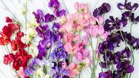 Bunga Kacang Manis. Sumber : hedgerowrose.com.