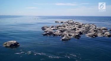300 penyu ditemukan mati di pantai pasifik selatan Meksiko pada Selasa (28/8) setelah terjebak di jaring ikan yang diduga milik nelayan di area Barra de Colotepec.