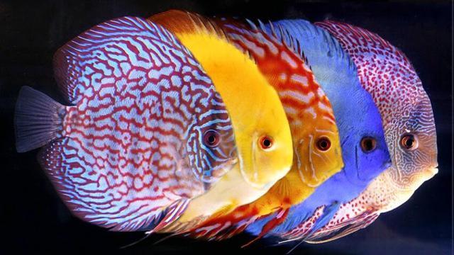 Kementerian Kelautan Beri Pelatihan Buat Peternak Ikan Hias Bisnis