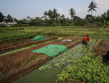 Memanfaatkan Lahan untuk Berkebun Kala Pandemi Corona