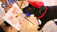 Seekor anjing jaa melukis setelah sering menyaksikan pemiliknya melukis.