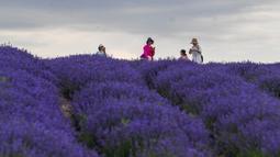 Orang-orang mengunjungi ladang lavender di Sigong, sebuah desa di Lucaogou, Wilayah Huocheng, Daerah Otonom Uighur Xinjiang, China (16/6/2020). Dengan lahan budidaya seluas 3.733 hektare, industri lavender di Wilayah Huocheng menciptakan 15.000 lebih lapangan pekerjaan pada 2019. (Xinhua/Zhao Ge)