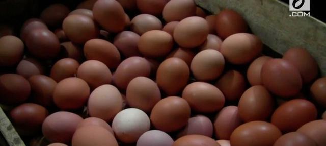 melonjaknya harga telur di Yogyakarta dikeluhkan warga karena dianggap menambah beban belanja sehari-hari. Akibat, merekapun terpaksa mengurangi pembelian jumlah telur.