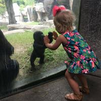 peristiwa unik dan menyentuh, ketika bayi Gorila bertemu  Balita (foto : facebook fort worth zoo)