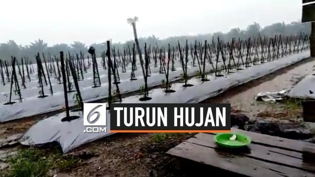 Hujan turun di Kalimantan dan juga Riau usai dilanda kebakaran hutan dan lahan (karhutla). Sebelumnya, penyemaian garam dilakukan di beberapa daerah oleh tim Teknologi Modifikasi Cuaca (TMC) di Provinsi Riau, begitupun dengan tim TMC Kalimantan.