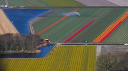 Pandangan udara ladang bunga tulip di Keukenhof, Lisse, Belanda, Rabu (10/4). Terdapat jutaan bunga tulip di ladang ini. (AP Photo/Peter Dejong)
