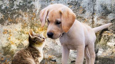 Ilustrasi peliharaan anjing dan kucing (pixabay)