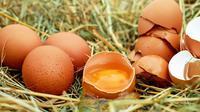 Ilustrasi putih telur. (Gambar oleh Couleur dari Pixabay)