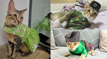 Kucing-kucing Ini Pakai Baju Tradisional Melayu Buat Rayakan Lebaran, Bikin Gemas