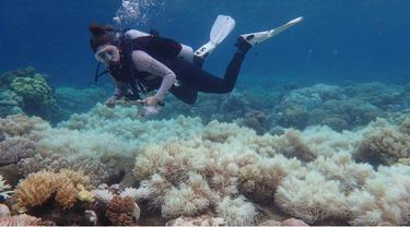 The Great Barrier Reef (Australian Research Council of Excellence For Coral Reef Studies)