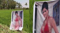 Kesal karena selalu rugi, petani ini menaruh gambar seksi di ladangnya agar tidak dicuri.