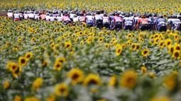 Sejumlah pembalap sedang melaju diantara kebun bunga matahari pada etape ke-14 balap sepeda Tour de France 2021 yang menempuh jarak 183 km, dari Carcassonne menuju Quillan, pada 10 Juli 2021. (AFP/Thomas Samson)