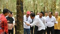 Presiden Jokowi melhat kualitas getah karet di Desa Sungai Lalan Sembawa Kabupaten Banyuasin Sumsel (Dok. Humas Pemprov Sumsel / Nefri Inge)