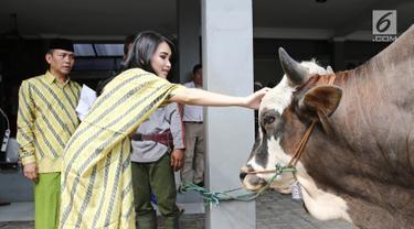 Penyanyi dangdut Ayu Ting Ting mengelus sapi hewan kurbannya di kediamannya kawasan Depok (1/9). Pada tahun ini Ayu Ting Ting berkurban sapi sebanyak 3 ekor. (Liputan6.com/Herman Zakharia)