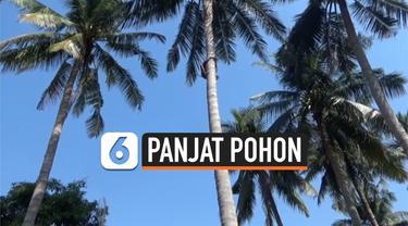 PANJAT POHON