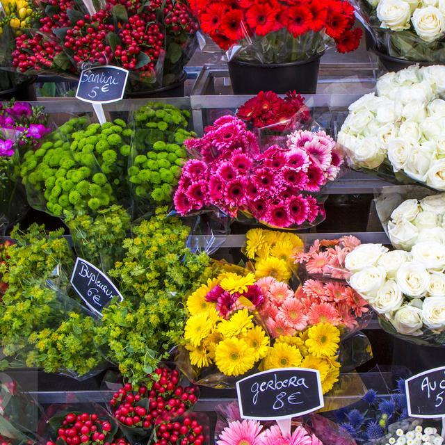 51+ Gambar Bunga Pancur Paling Keren