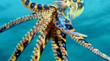 6 Hewan Laut Paling Berbisa