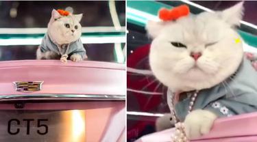 Jadi Model Mobil di Pameran Otomotif, Kucing Ini Raup Pendapatan hingga Rp 22 Juta