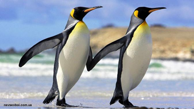 600 Contoh Gambar Hewan Pinguin HD Terbaik