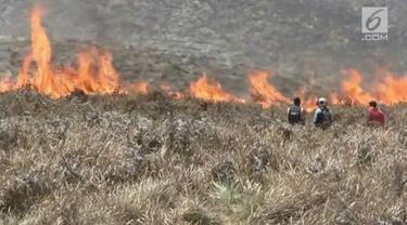Kebakaran menghanguskan ratusan hektar lahan taman nasional Gunung Bromo. Kebakaran diperparah dengan kencangnya angin di sekitar lokasi kejadian.