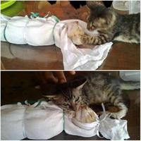 kucing ini meratapi kematian keluarganya yang terlebih dahulu meninggalkan dunia (foto : facebook)