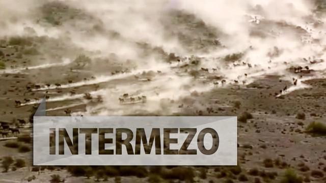 Kawanan kuda liar berlari menerjang gurun Arizona terekam helikopter operator berita sebuah stasiun televisi