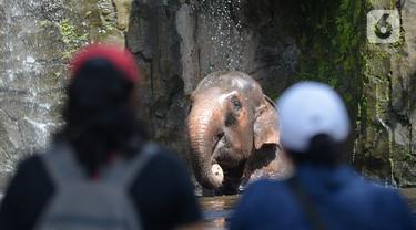 FOTO: Hore, Taman Marga Satwa Ragunan Kembali Dibuka