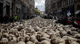Ratusan domba saat diajak para peternak dalam aksi unjuk rasa menentang kebijakan 'Plan Loup' di Kota Lyon, Prancis, (9/10). Menurut peternak, kebijakan pemerintah tersebut hanya merugikan para peternak. (AP Photo / Laurent Cipriani)
