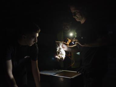 Relawan Animals Lebanon Kamal Khatib (kanan) dan rekan-rekannya mengeluarkan anak kucing dari perangkap usai menyelamatkannya dari puing bangunan dekat lokasi ledakan besar di Beirut, Lebanon, Kamis (13/8/2020). Animals Lebanon dikerahkan untuk menyelamatkan hewan peliharaan. (AP Photo/Felipe Dana)