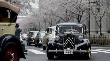 Peserta saat mengendarai Mobil klasik Citroen Avant 11CV Legere tahun 1952 (kanan) di samping pohon sakura selama Japan Classic Automobile 2016 di Tokyo, Jepang (3/4). Pameran mobil klasik ini diadakan dibawah pohoh sakura. (AFP/Toshifumi Kitamura)