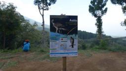 Suasana lokasi pelepasan Elang Brontok (Nisaetus Cirrhatus). Lokasi yang berada di area berkemah di Cangkuang, Cidahu, Jawa Barat ini ditentukan setelah melewati habitat (habitat assesment) yang dilakukan oleh Balai TNGHS. (merdeka.com/Imam Buhori)