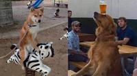 Kelakuan nyeleneh anjing (Sumber: Instagram/sukijan.id)