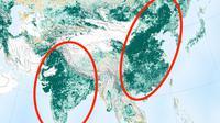 Peta Bumi kian hijau. (NASA)