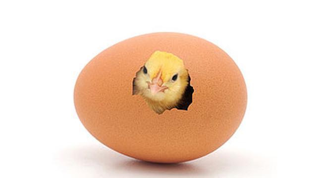 Download 83 Gambar Lucu Tukang Ayam Terlucu