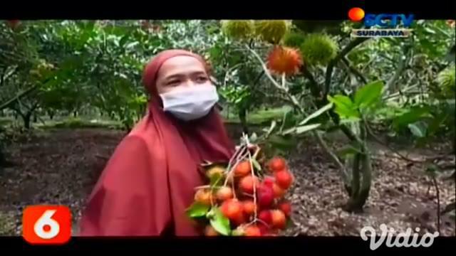 Di Nganjuk, Jawa Timur, terdapat kampung yang menyulap pekarangan rumah warga menjadi wisata buah, yakni bernama kampung rambutan. Hanya dengan membayar uang masuk Rp.10.000, pengunjung bisa memetik dan menyantap buah rambutan sepuasnya.