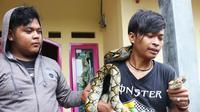 Penangkapan ular sanca (Liputan6.com/ Achmad Sudarno)