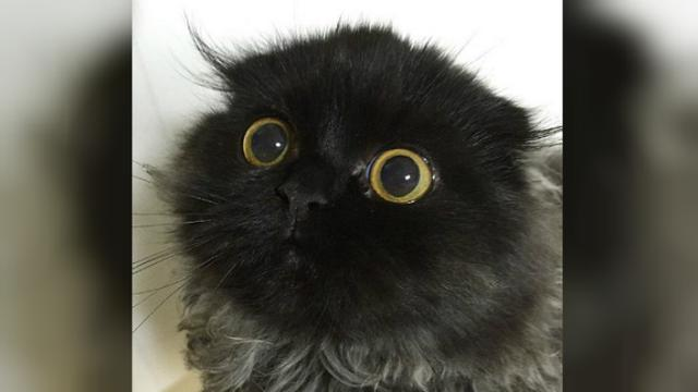 Unduh 67 Koleksi Gambar Hantu Kucing Paling Baru Gratis HD
