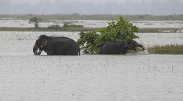 Gajah berjalan melintasi genangan air di distrik Morigaon di Assam, India (26/6/2020). Banjir  disebabkan meluapnya Sungai Brahmaputra akibat hujan yang terus turun. (AP Photo/Anupam Nath)
