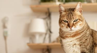 8 Tanda Kucing Diam-Diam Sedang Marah pada Kamu