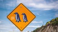 Ilustrasi penguin (iStock Photo)