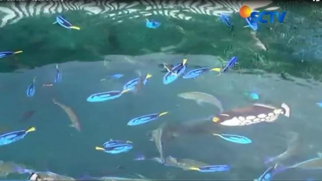 Aneka jenis ikan laut seperti ikan hias hingga hiu sirip dan hiu paus dapat terlihat dengan mata telanjang.