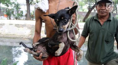 Seekor anjing setelah diselamatkan di gorong-gorong kali Gresik, Menteng, Jakarta Pusat, Rabu (23/5). Anjing yang terjebak selama 3 hari di gorong-gorong tersebut berhasil diselamatkan dan dibawa ke tempat penampungan. (Liputan6.com/Arya Manggala)