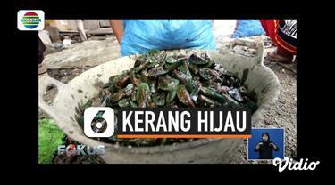 Timbal atau logam berat yang mencemari Teluk Jakarta membuat biota laut seperti kerang hijau ikut tercemar. Benarkah kerang hijau yang diambil dari perairan Jakarta berbahaya untuk dikonsumsi? Kita simak dalam liputan khusus, Hoax atau Bukan.