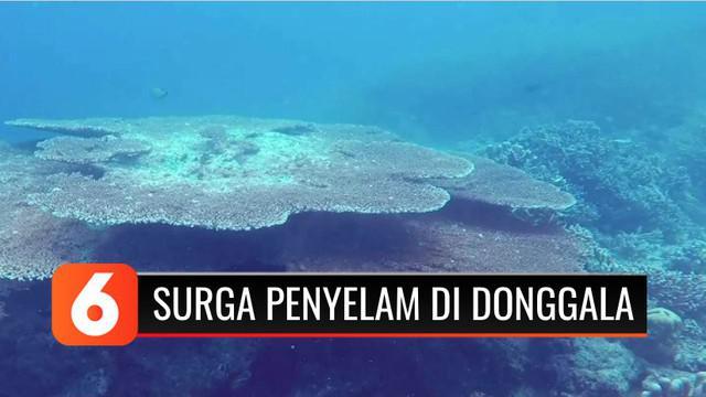 Apakah kamu hobi snorkeling atau menyelam? Pantai Tanjung Karang di Kabupaten Donggala, Sulawesi Tengah, bisa menjadi salah satu rekomendasi tempat menyelam yang seru bagi pemula maupun yang sudah ahli.